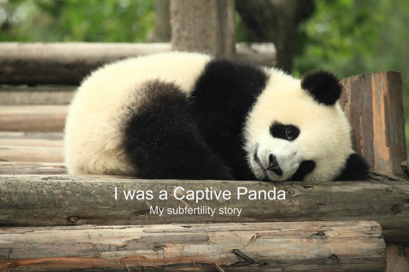"""Panda"" by George Lu (2011) via Flickr, CC BY 2.0. Text added by author."