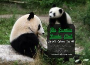 PandaClub-base