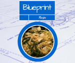 Blueprint- Chicken Fettuccine Vegetables